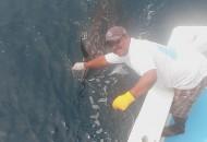 Capt.. Pete sailfish relase