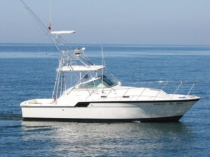 puerto vallarta fishing charters