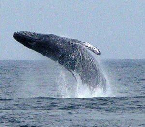 nuevo vallarta whales watching